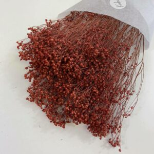 Droogbloemen bundel Gypsophila pink
