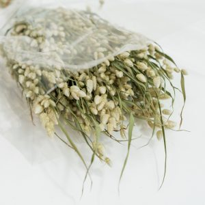 Droogbloemen bundel Briza Maxima naturel